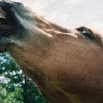 """So cool, even horses are singing:""""It's a beautiful, beautiful life!.."""""""