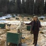 Gabriela at Fairbanks Mrs. Pascale Snow dogs Fram
