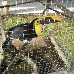 One of the two resident toucans by the pool bar...
