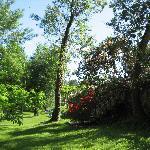 jardines al lado del río