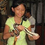 Petting a Snake