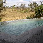 Lodge pool where you can see the animals