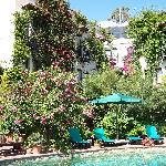 lush pool and grounds