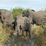 Elephants all of a sudden surrounding our vehicle