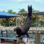 Sea Lion show at Aquarium with resort in background