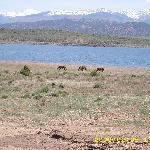 wild horses still roam free near the Sanchez Reservoir (May 2008)