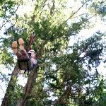 Climbing the tree for the zip line!