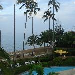 Pool views blocked by bushes