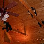 stuffed bears on the rafters
