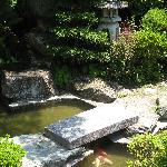 the koi pond in the front garden