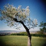 Le Colombe is set is beautiful grounds overlooking the Assisi plain