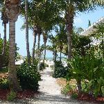 Chemin vers la plage longeant le Pineapple