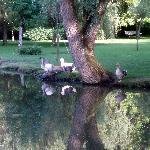 quelques animaux du parc