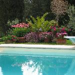 Pool and lovely flowers