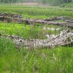Thomas Farm Beaver Pond