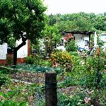 allotments in the Kleingartnerverein, Trier