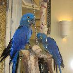 Parrots in the El Conquistador Lobby