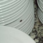 cockroaches on clean plates in resturant