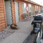 our dog in front of the motel