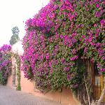 Every street covered with bouganvillea