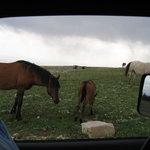 Wild Horse Range (2) 7-2005