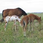 Indian Pony Band 7-6-05