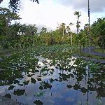 The Botanic Garden (18114287)