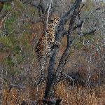 This leopard was teaching her nearby cub how to hunt (although she didn't get the squirrel).