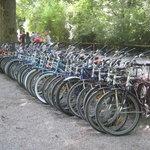 that's alotta bikes!!