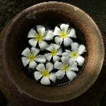 Vaso di fiori sul vialetto