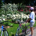 Bikes at the Rose Garden