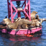 Seals on a bouy