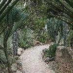cactus garden at rear of property
