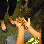 holding another type of stick bug