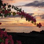 Bouganville sunset