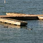 Ducks near the boat dock