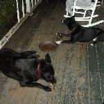 Rufus and Lexi enjoying their daily BBQ