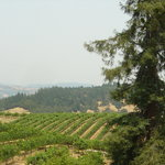 Raymond Burr winery