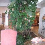 Tamarindo tree in the lobby