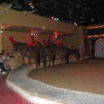 side seating during the Dancing Horses show