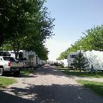 Shady campsites. They can really pack them in.