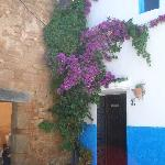 hanging flowers and blue wall
