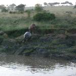 Фотография Serian Safari