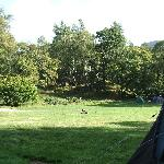 Quiet Weekend on Hollows Farm Campsite