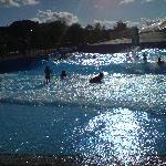 vawes pool