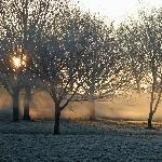 Frosty morning in Regents Park