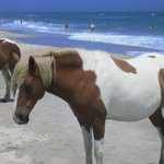 Assateague Beach Foto