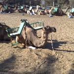 awesome camels maspalomas