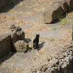 The famous cats of Largo Argentina