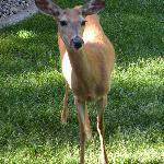 Daphne the Deer Greets Us!